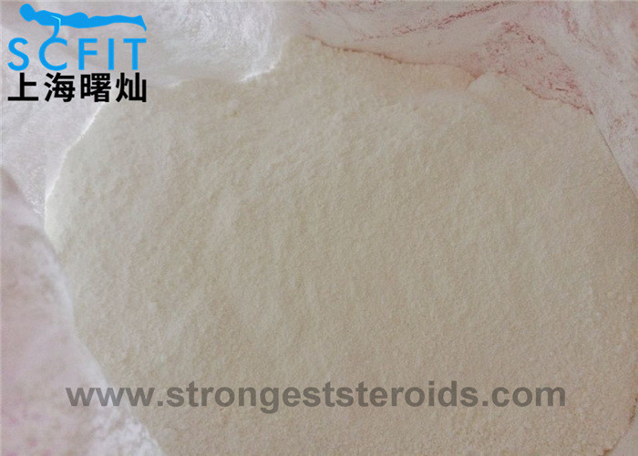 Muscle Building Testosterone Androgenic Steroid 99.9% Powder , Muscle Gain Steroids